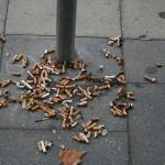 cigarette-trash1